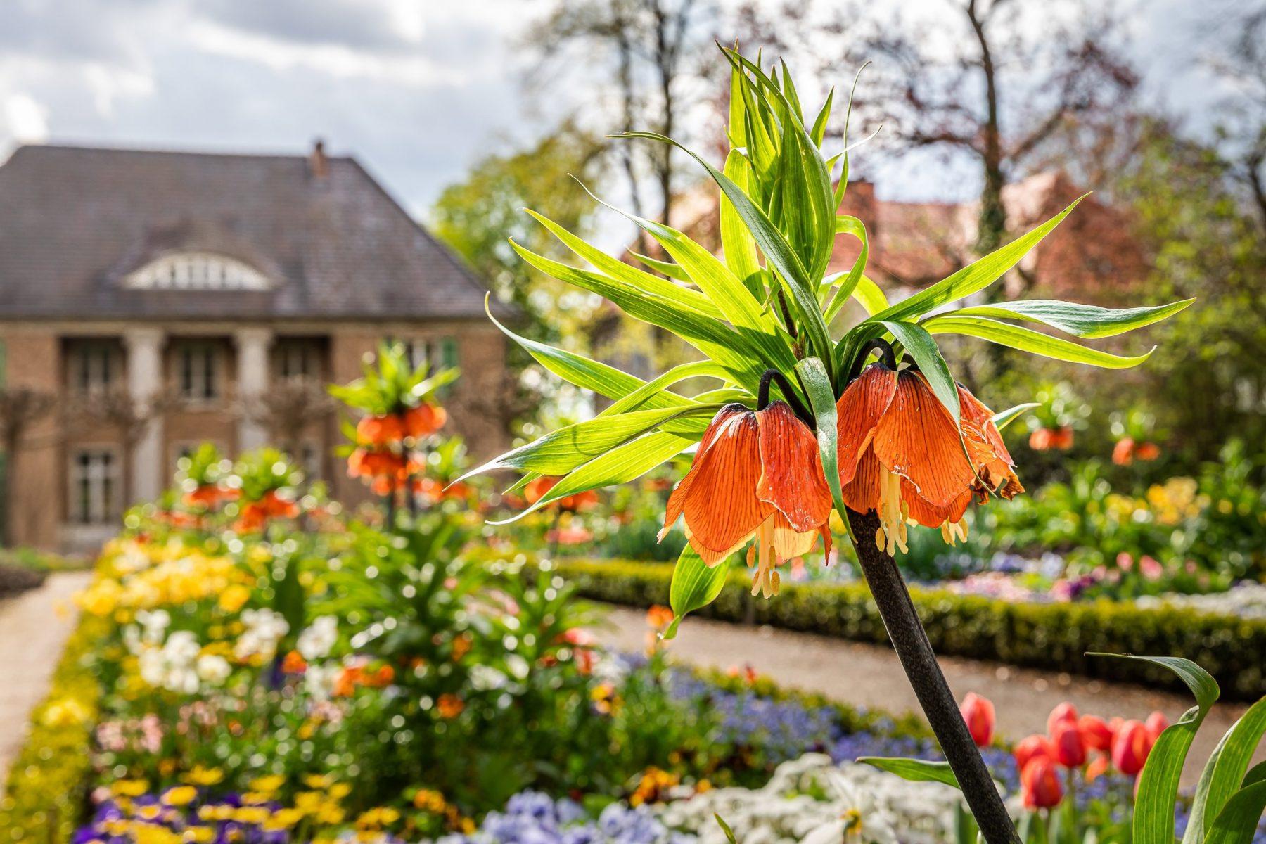 Orangene Kaiserkronen blühen, dahinter erstreckt sich ein farbenfrohes Beet bis hin zur Frontseite der Liebermann-Villa.