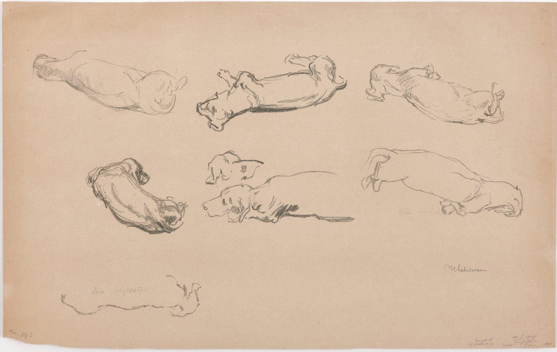 Das Blatt zeigt acht Skizzen eines Dackels in verschiedenen Liegepositionen.